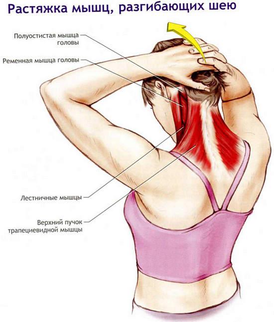 Миозит шеи: симптомы и лечение в домашних условиях