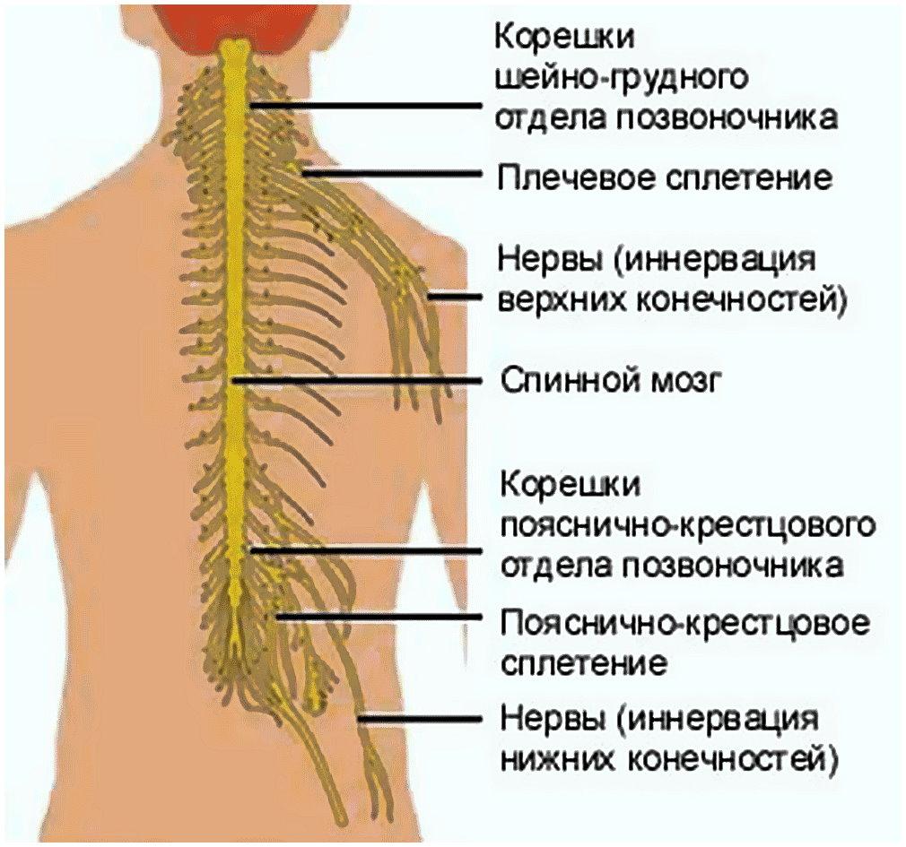 Защемление нерва в грудном отделе лечение в домашних условиях